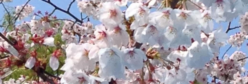 【140405】ゆるゆるカフェ&お花見