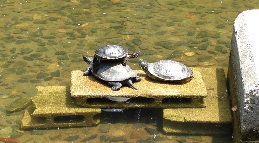 新宿中央公園の池の亀|ゆるゆるカフェ
